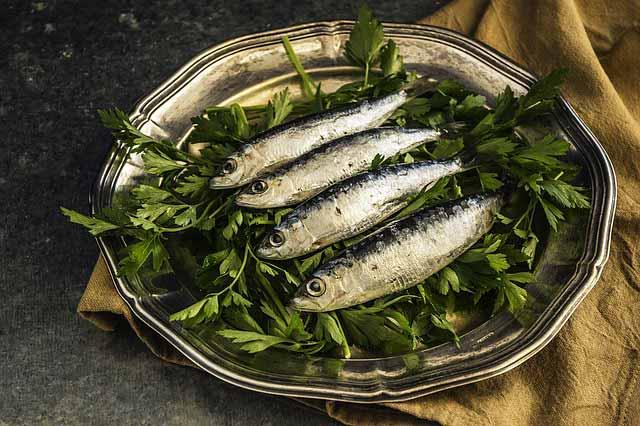 seafood-sarden