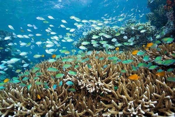 wisata snorkling jember banyuwangi